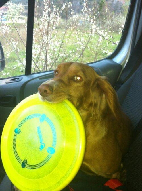 Ska Disc Dog