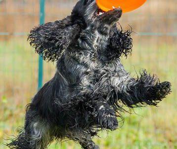The best dog for discdogging…